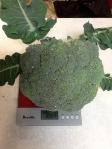 The 1.054kg Broccoli Head!